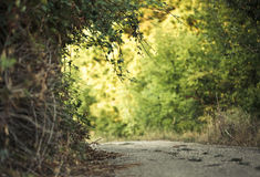 Green alley Stock Photo