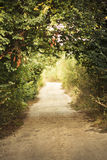 Green alley Royalty Free Stock Photography