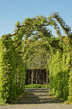 Green alley in the garden. Green arch alley in the beauty garden Royalty Free Stock Images