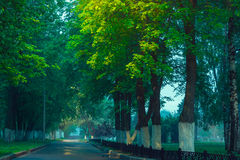 Green alley in park Royalty Free Stock Photography