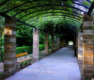 Green alley in park Stock Image