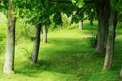 Green alley in park. Stock Images