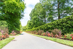 Green alley in park. Royalty Free Stock Photography