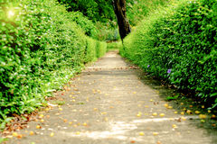Green alley,path in the park Royalty Free Stock Photos