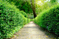 Green alley,path in the park Royalty Free Stock Photography