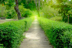 Green alley,path in the park Royalty Free Stock Images