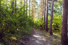 Green alley with rural footpath Stock Photos