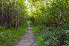 Green alley with rural footpath Royalty Free Stock Image