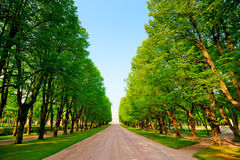 Green alley in summer park Royalty Free Stock Images