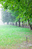 Green alley in summer park at morning with fog Royalty Free Stock Photos
