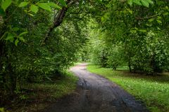 Green alley on a sunny day Royalty Free Stock Images