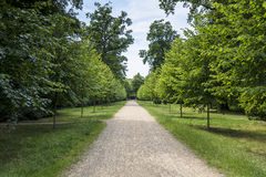 Green alley with trees in the park Stock Images