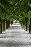 Green alley with trees in the park Royalty Free Stock Photos