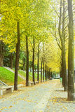 Green alley with trees in the park Stock Photography