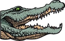 Green alligator head Royalty Free Stock Image
