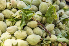 Green Almond Nuts. Green almond, also known as bitter almond- natural source of vitamins Royalty Free Stock Photos