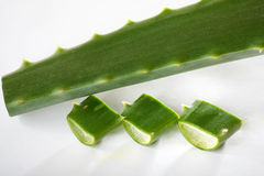 Green aloe Royalty Free Stock Photo