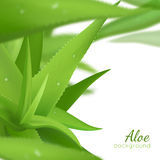 Green Aloe Vera Realistic Background Stock Images