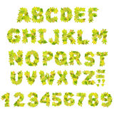 Green alphabet. Alphabet - letters with a green leaves Stock Photo
