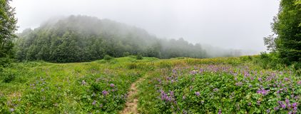 Green alpine meadow with flowers and trail and forest in thick fog stock photography