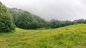 Green alpine meadow and forest in thick fog stock images