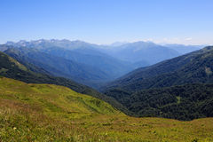 Green alpine meadows and evergreen forest in mountain valley landscape Stock Photo