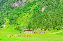 Green alpine meadows, Zillertal, Austria Stock Photos