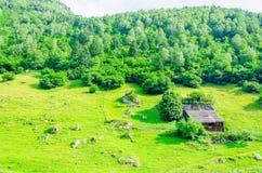 Green alpine meadows, Zillertal, Austria Stock Photography