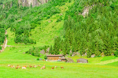 Green alpine meadows, Zillertal, Austria Stock Photo