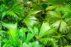Green Amazonia Theme Stock Image