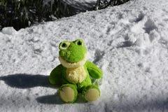 Green, Amphibian, Frog, Fauna royalty free stock photo