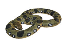 Green Anaconda on White Stock Photography