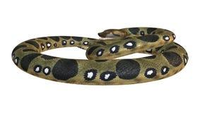 Green Anaconda on White Royalty Free Stock Image