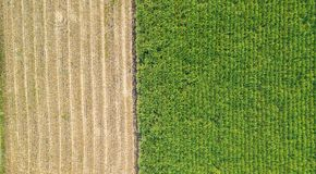 Free Green And Brown Field Divided In Half. Aerial View Rows Of Soil Before Planting.Sugar Cane Farm Pattern In A Plowed Field Prepared Royalty Free Stock Photography - 162060257