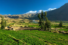 Green Andean valley, Peru Stock Photography