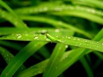 Green animal Stock Photos