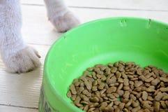 Green animal food bowl. Stock Photo