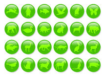 Green animals icons. Green icons with animals on the white Stock Images
