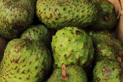 Green annona fruits Royalty Free Stock Image
