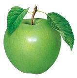 Green Apple. Detailed illustration of a green apple Royalty Free Stock Photography