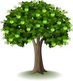 Green apple on apple tree. Illustration of Green apple on apple tree Royalty Free Stock Photo