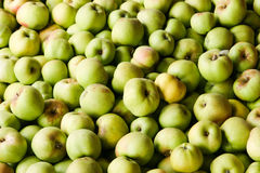 Green Apple Background. Lots of green ripe apples, background Royalty Free Stock Photography