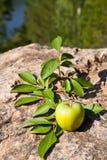 Green apple on big stone Royalty Free Stock Image