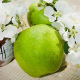 Green apple with branch of a blossoming apple-tree Royalty Free Stock Photos