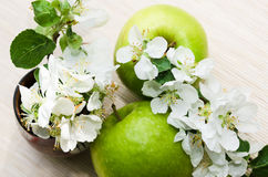 Green apple with  branch of a blossoming apple-tree Stock Photography
