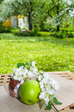 Green apple with a branch of a blossoming apple-tree. On a table Stock Photo