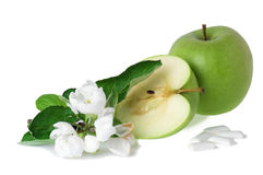 Green apple and bubblegum. The green apple, blossoming branch and bubblegum Stock Image