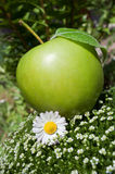 Green apple and camomile Royalty Free Stock Image