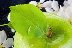 Green apple and caterpillar Royalty Free Stock Image