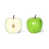 Green apple with cut half sketch draw isolated Stock Images